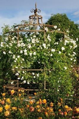 4000 plants de rosiers, plaisir des yeux