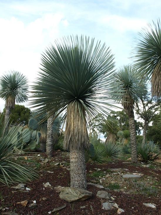 Jardin zoologique tropical parcs et jardins paca for Jardin zoologique tropical